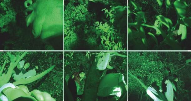 《鸡同鸭讲,猪同狗说》2005年,单屏录像,6分钟 艺术家邀请了数位城市郊区饲养家禽家畜的农民,在夜间爬上城市景观性绿化植物模仿各种他们熟悉的动物叫声(周滔模仿了犬吠)