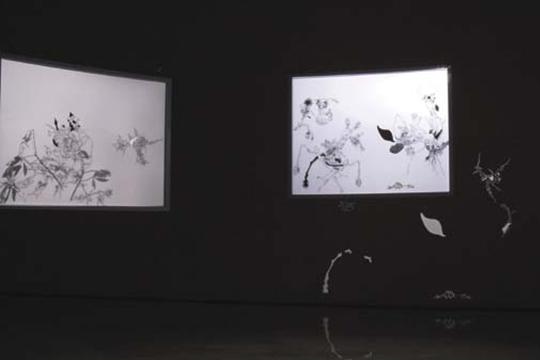 沈瑞筠,《湿地》,2010-2013年,动画装置,3分15秒