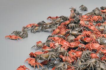 艾未未,《和谐》,2012年,装置展览现场,赫希洪博物馆和雕塑园,华盛顿特区