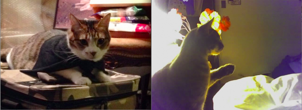 Left: Wendy's cat, ___. Image courtesy Wendy Yao Right: Chantal's cat, Dauphine.  Image courtesy Chantal Wong.
