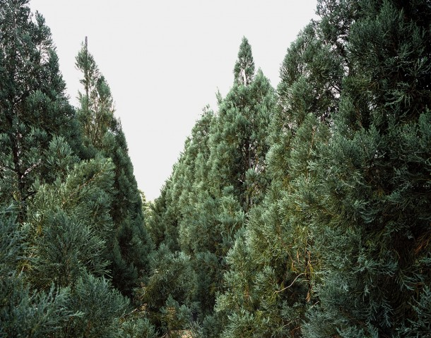 "Woods, from the series ""As It Grows Older & Wiser,"" 2015.  Courtesy the artist"