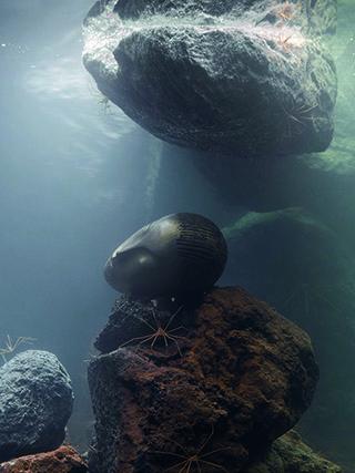 《Zoodram 5》,2011年,玻璃池,过滤系统,树脂面具,寄居蟹,箭蟹和玄武岩,76.2×134.62×99.06厘米