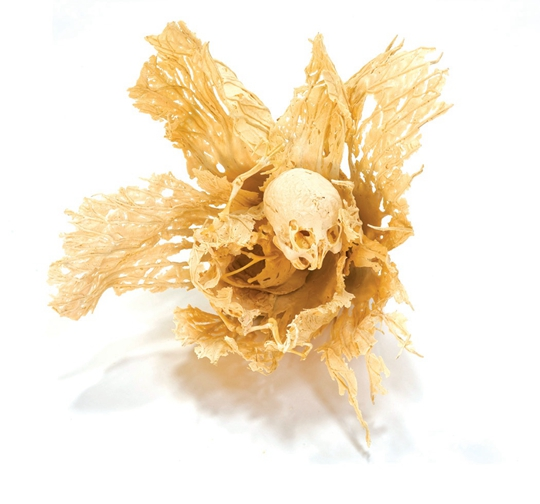 Shen Shaomin, Experimental Field No. 2, 2004, cabbage, bone, bone meal, glue, 40 x 40 x 50 cm