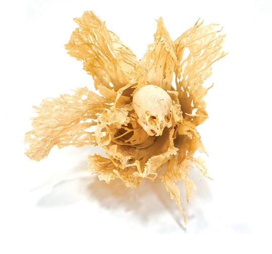 沈少民,《实验田2号》,2004年,白菜,骨头,骨粉,胶,40×40×50厘米