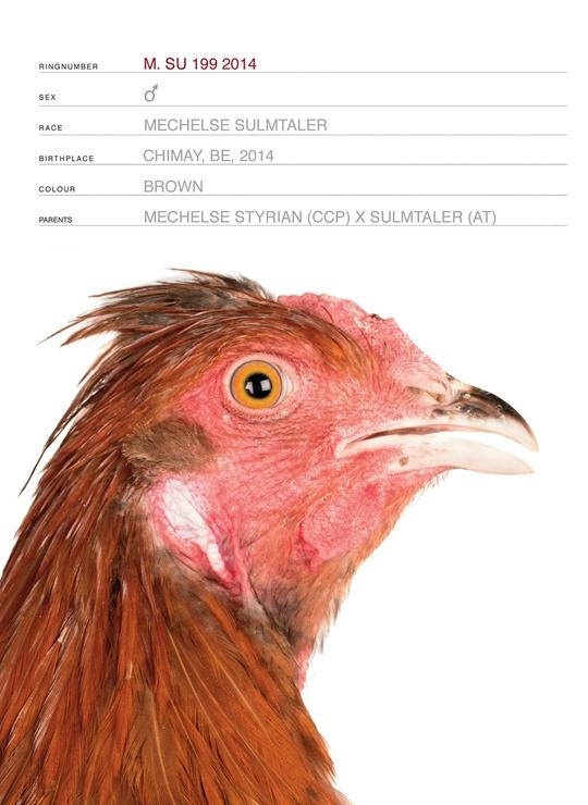 图片来自展览《这不是一只鸡》