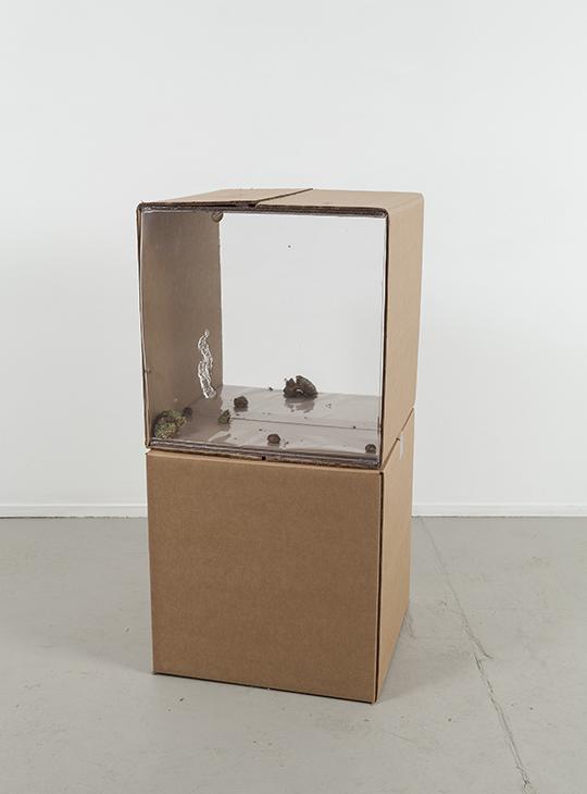 《分离:言卖?言卖?》,2014年,硬纸板、树脂、蜗牛(未在作品中)、后叶催产素、苔藓,47 × 47 × 47 厘米