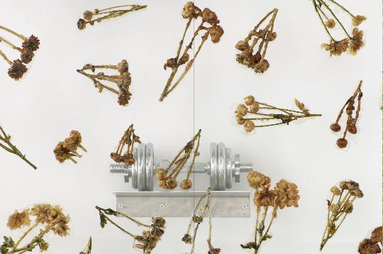 《生活奉上了偶然出现的粉红独角兽》(局部),2013年,天妇罗式炸制鲜花、树脂、树脂玻璃、不锈钢隔板、镀铬哑铃,243.84 × 629.92 × 15.24 厘米
